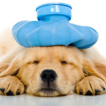 How To Take A Bite Out Of The Rising Costs Of Pet Care