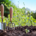6 Budget Friendly Ways To Improve Your Garden